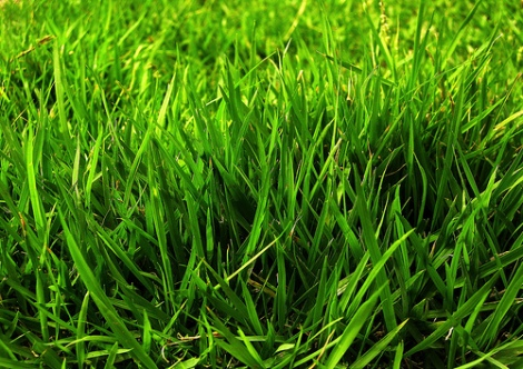 Keeping your grass a deep dark green makes your home look better.