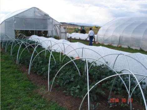 Divide-Creek-Farms-greenhouses
